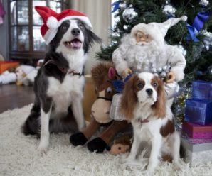 Порода собаки из фильма «Елки»: кто такие Пират и Йоко