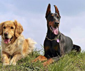 Самые умные породы собак: первая десятка
