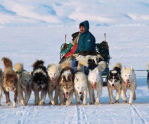 Общая характеристика популярных пород северных собак