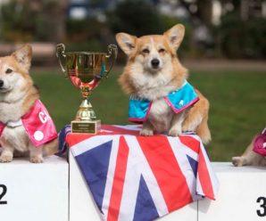 Английские породы собак: полный обзор с фотографиями и названиями