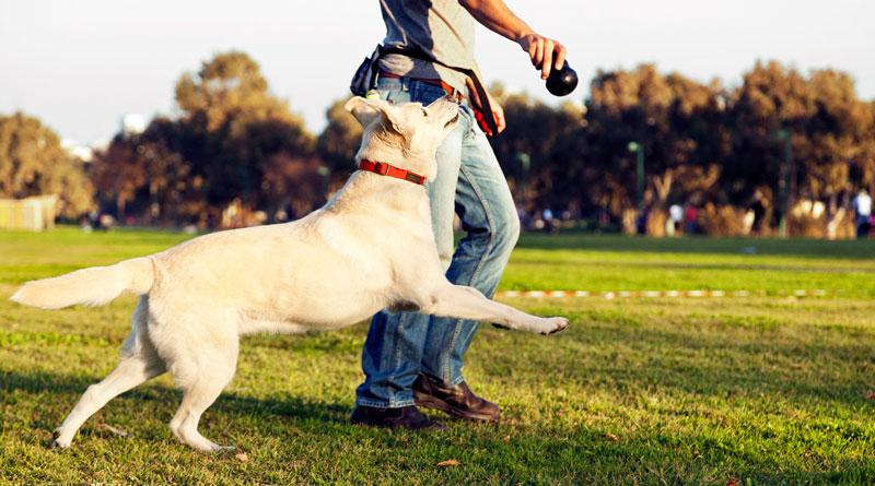 Упражнения для собак, отвлечение от травы