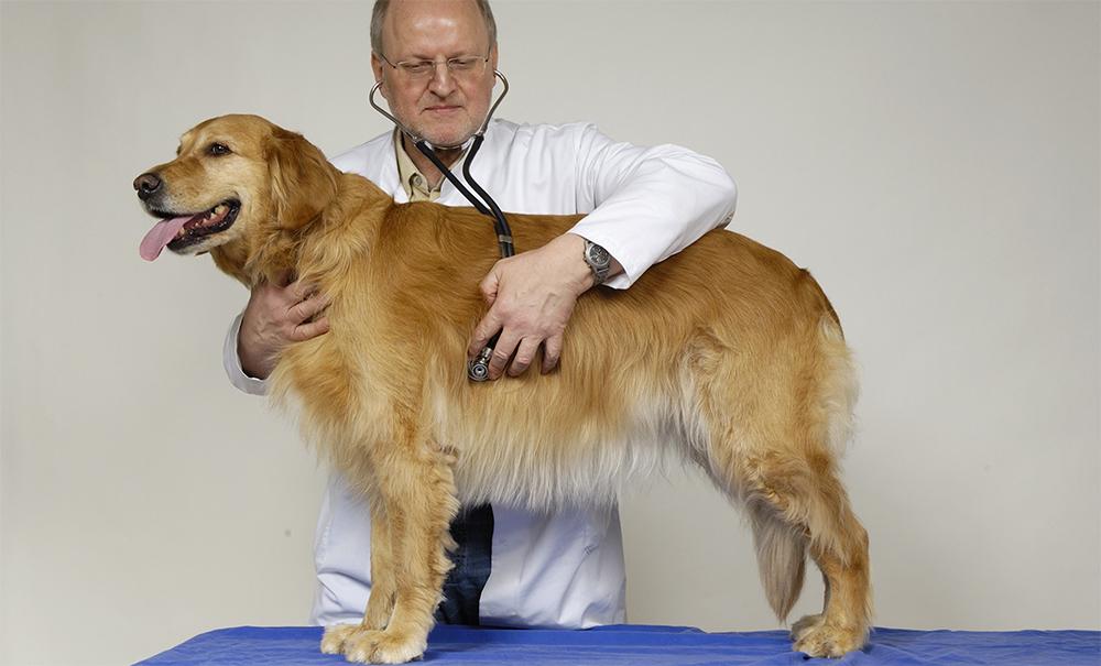 Иследование собаки