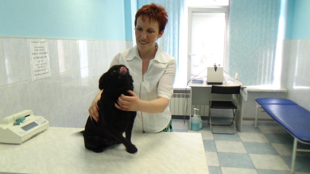 Диагностика пододерматита у собак