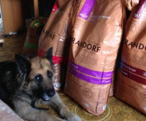 Сбалансированный корм для собак Грандорф