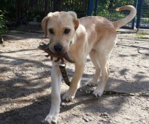 Все что нужно знать об уходе за щенком лабрадора: как вырастить настоящего пса