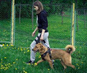 Как научить собаку команде «Рядом», инструкция и видео руководство