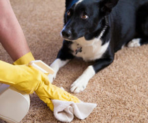 Как отучить собаку гадить и писать дома, проверенные временем методы и средства