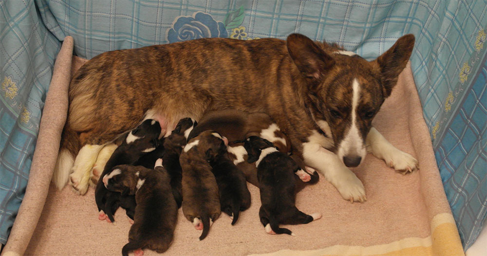 Собака с щенками после родов
