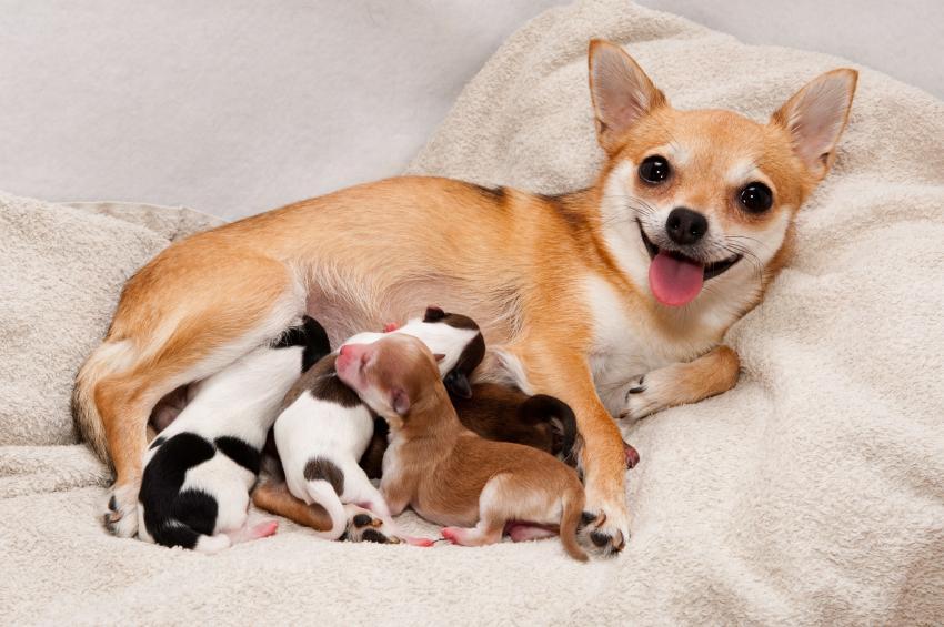 Оборудуем место собаке для родов