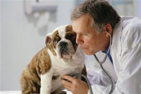 Симптомы энтероколита у собак