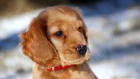 Ошейник для щенка