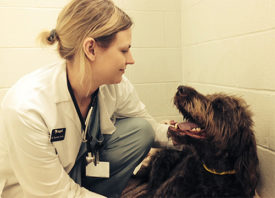 Причины возникновения миозита у собак