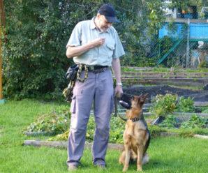 Как выбрать, воспитывать и дрессировать щенка немецкой овчарки