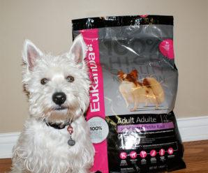 Корм для собак Eukanuba: состав корма и отзывы о продукте