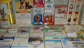 Лечение токсокароза у собак