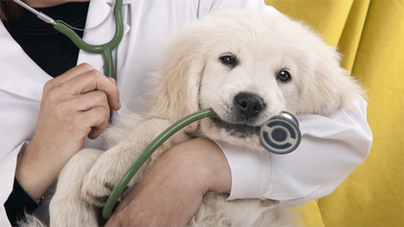 Собака простужена