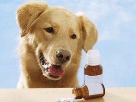 Витамины для собаки