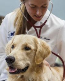 Собака у ветеринара после сотрясения мозга