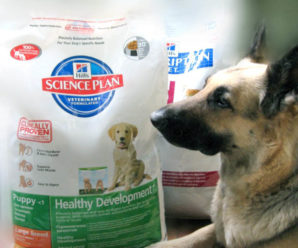 Корм для собак Hills – рецепт лучшей жизни от американского производителя