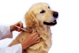 Лечение лимфаденита