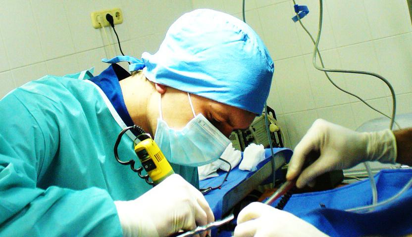 Проводят операцию собаке