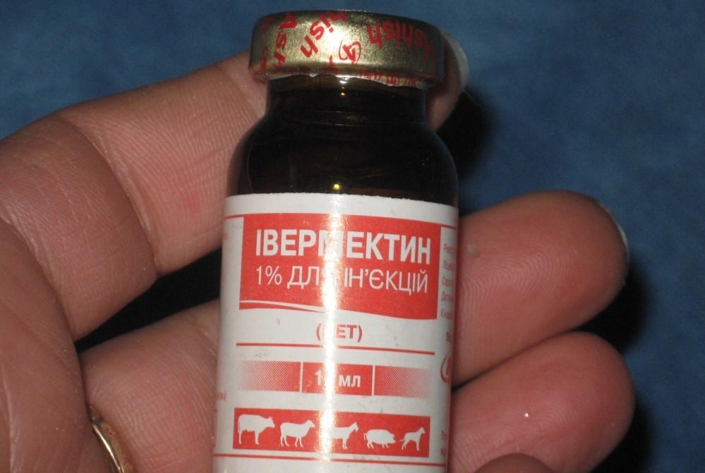 Как вылечить овчарку от демодекоза thumbnail