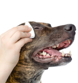 Профилактика кератита у собак