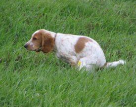 Диагностика вида поноса у собак