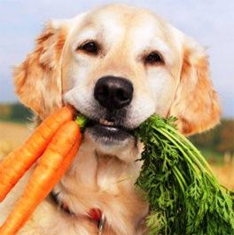 Правильное питания для собаки при рахите