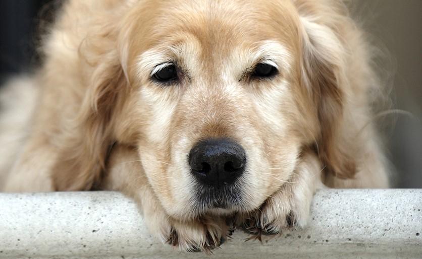 Как проявляется гастрит у собак