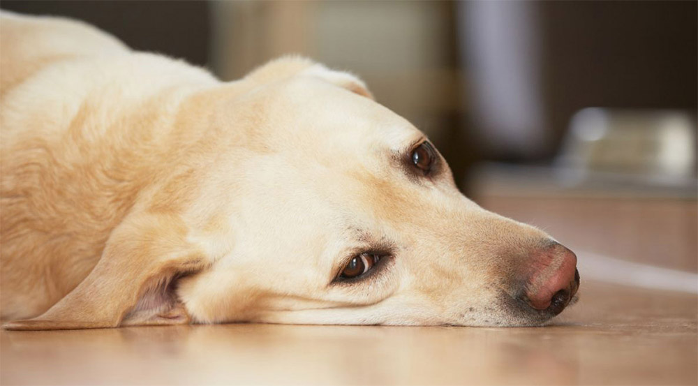 Характер выделений у беременных собак