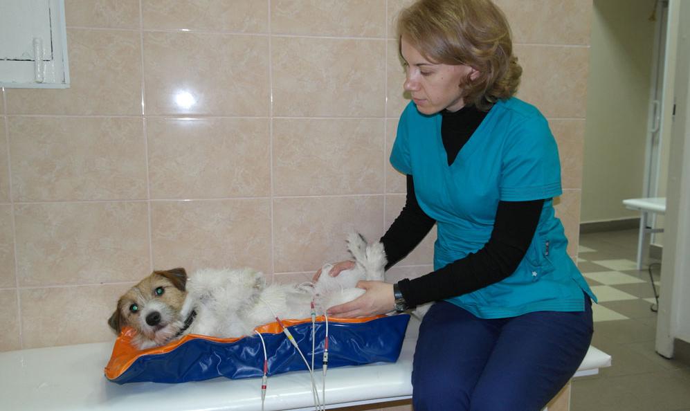 Предоперационная подготовка собаки