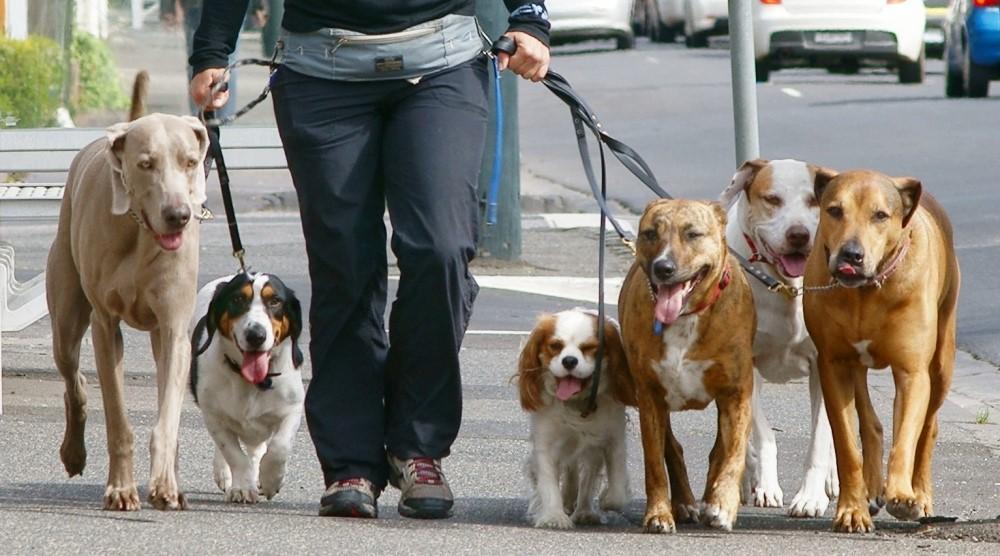 Выгул собак в городе