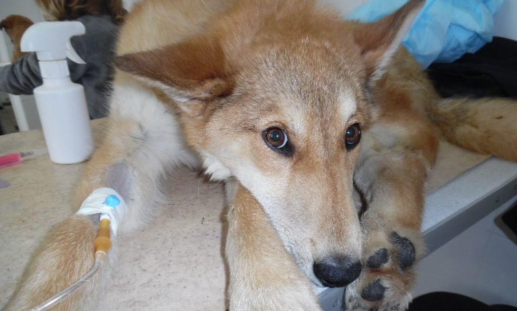 Правила лечения инсульта у собак
