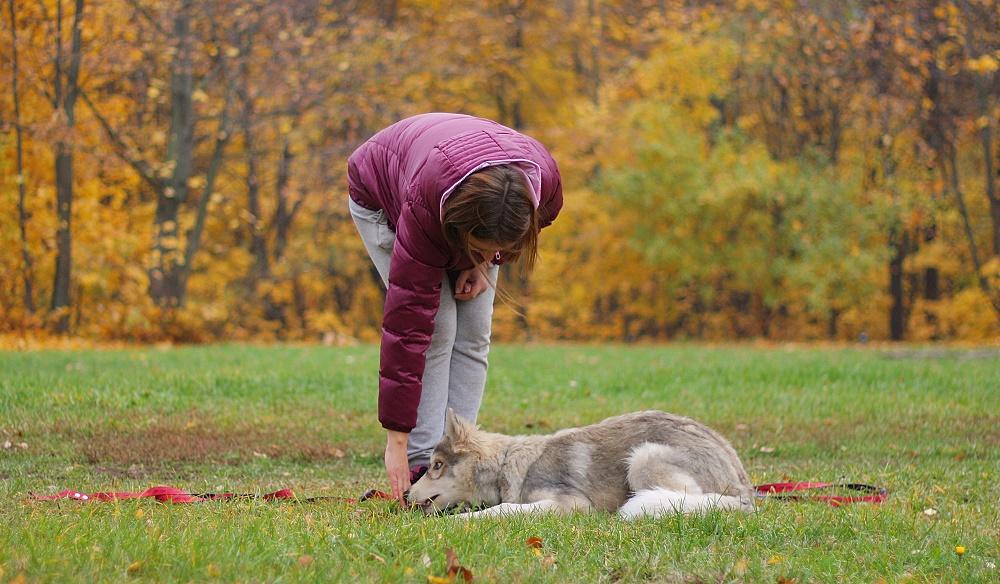 Обучение собаки ложиться по команде