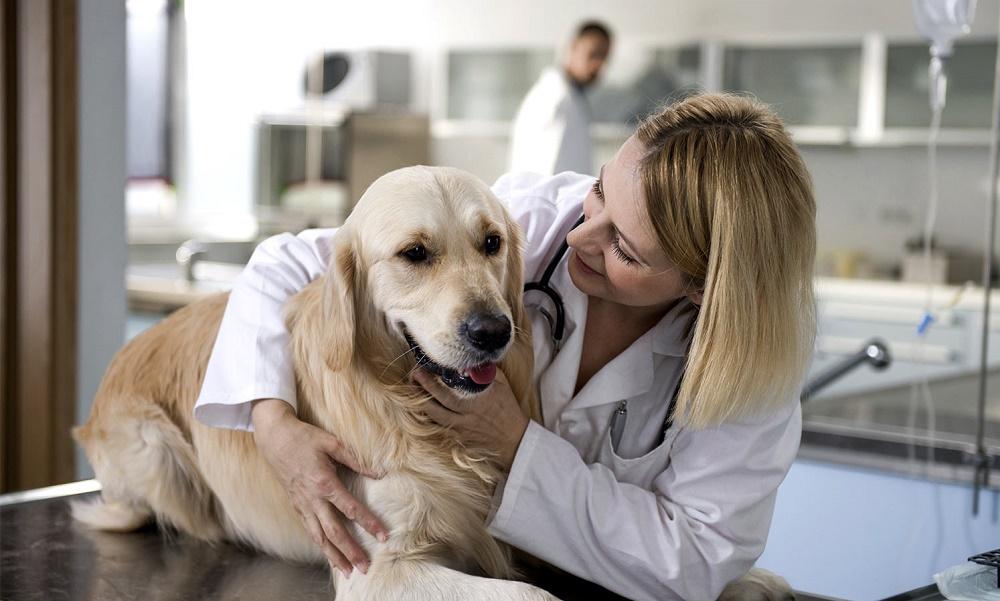 Профилактика инсульта у собак