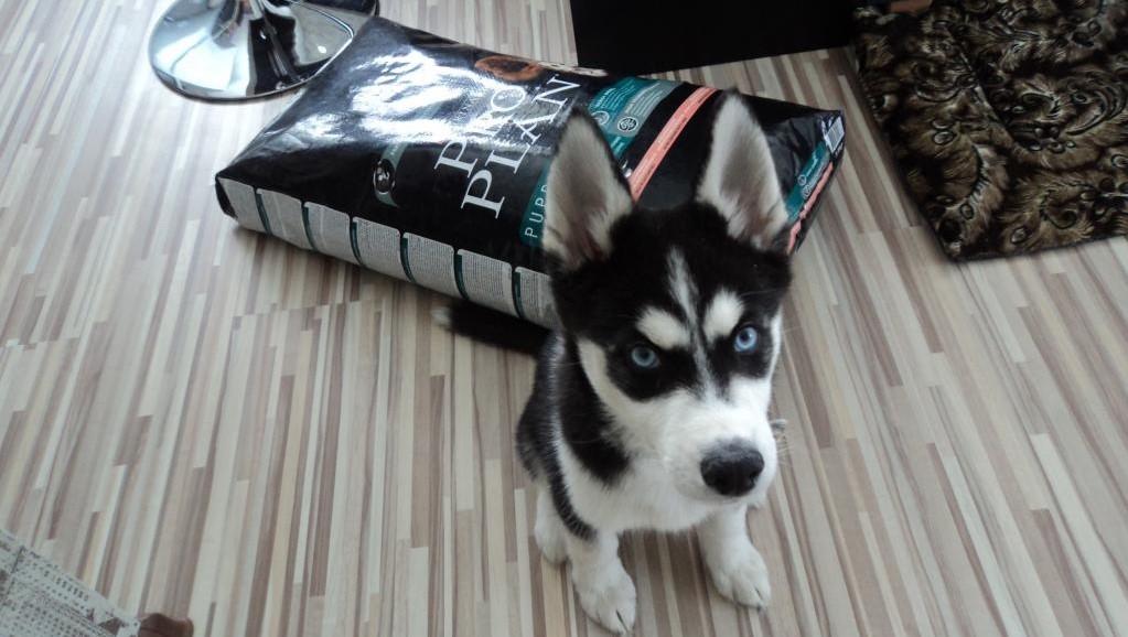 Корм ProPlan для щенков