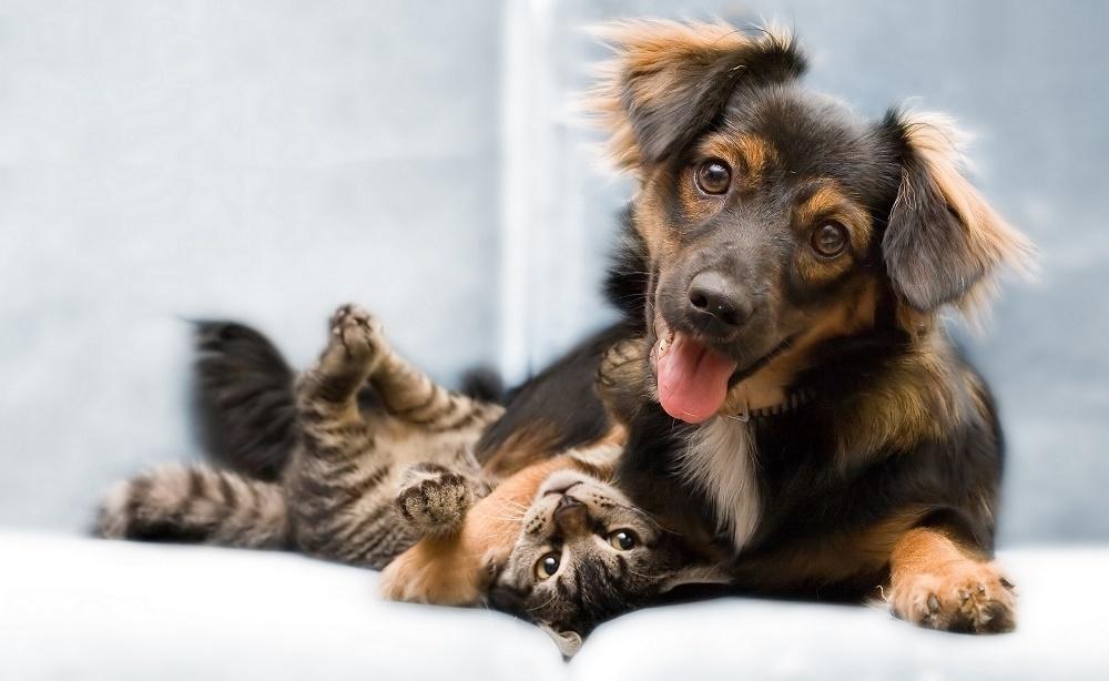 Пути заражения микоплазмозом у собак