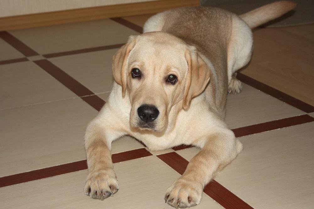 Применеие Секс Барьера для собак