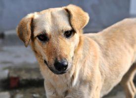 Симптомы лимфомы у собак