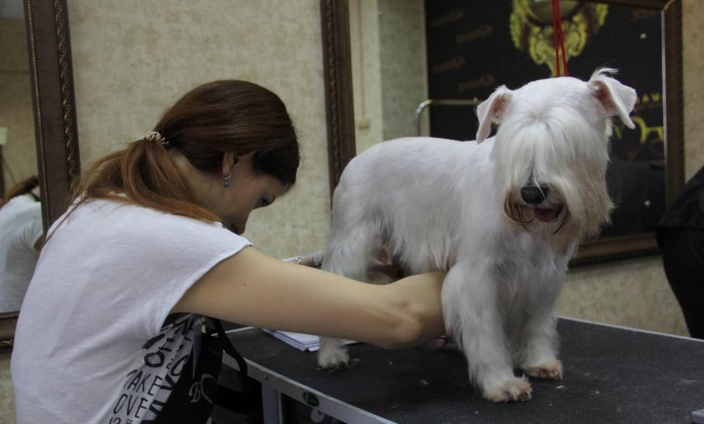 Лечение перхоти у собак