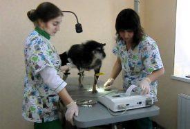 Диагностика дирофиляриоза у собак