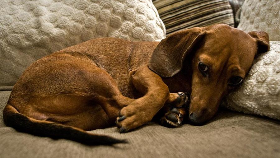Опасность цистита у собак