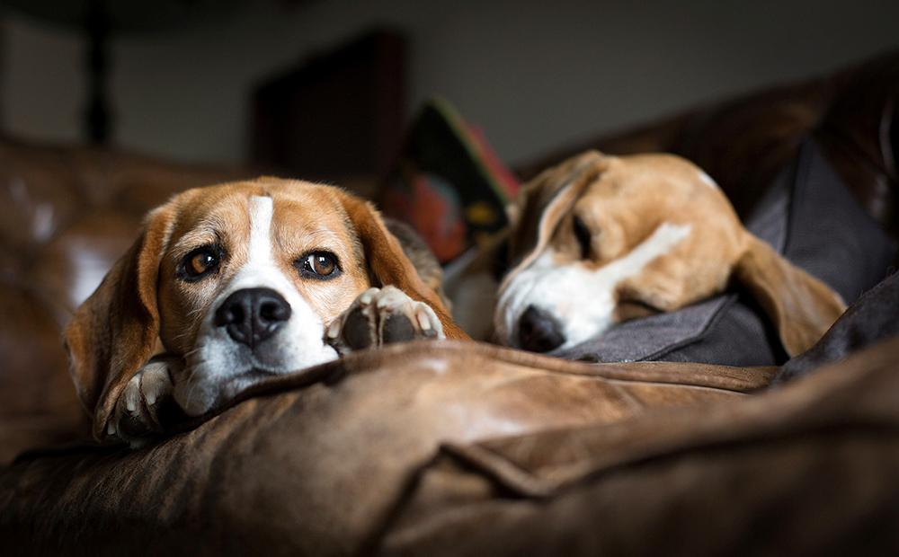 Лечение цистита у собаки