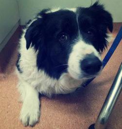 Симптомы цистита у собак