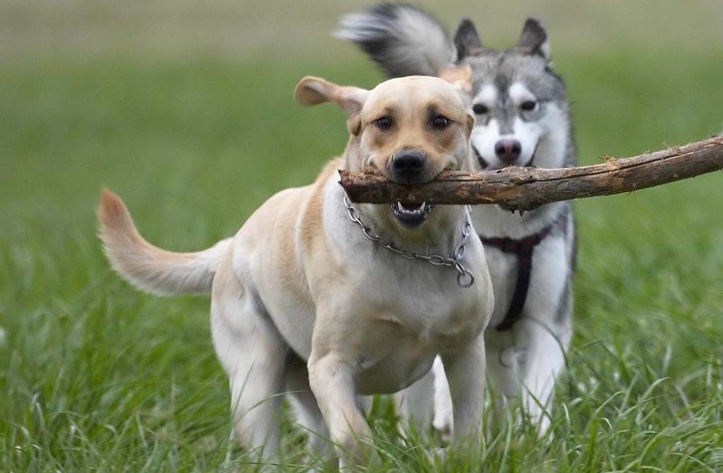 Советы по выбору клички для собак на английском языке