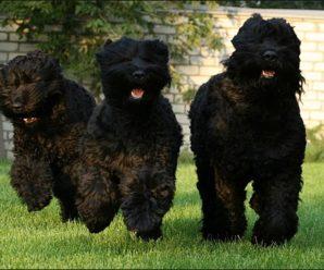 Как назвать собаку: русские клички для питомцев