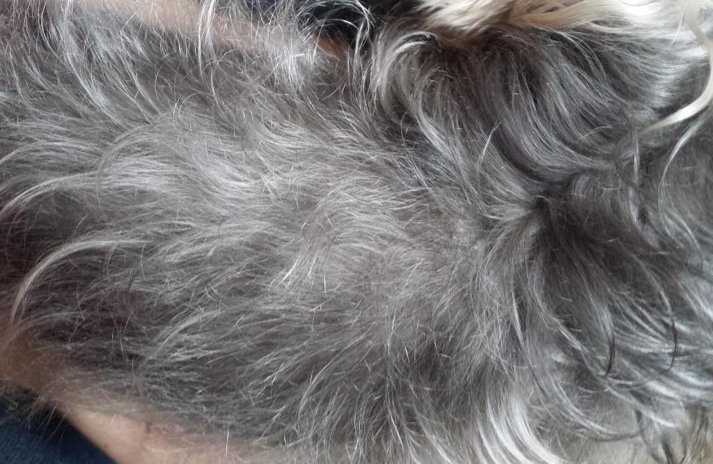 Причины алопеции у собак