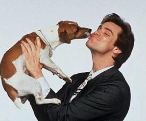 Снимаем маски: порода собаки из фильма «Маска» с Джимом Керри