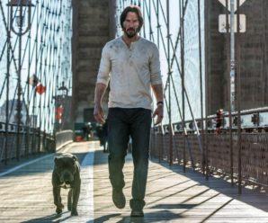 Собаки, которые снимались в триллерах «Джон Уик» и Джон Уик» 2